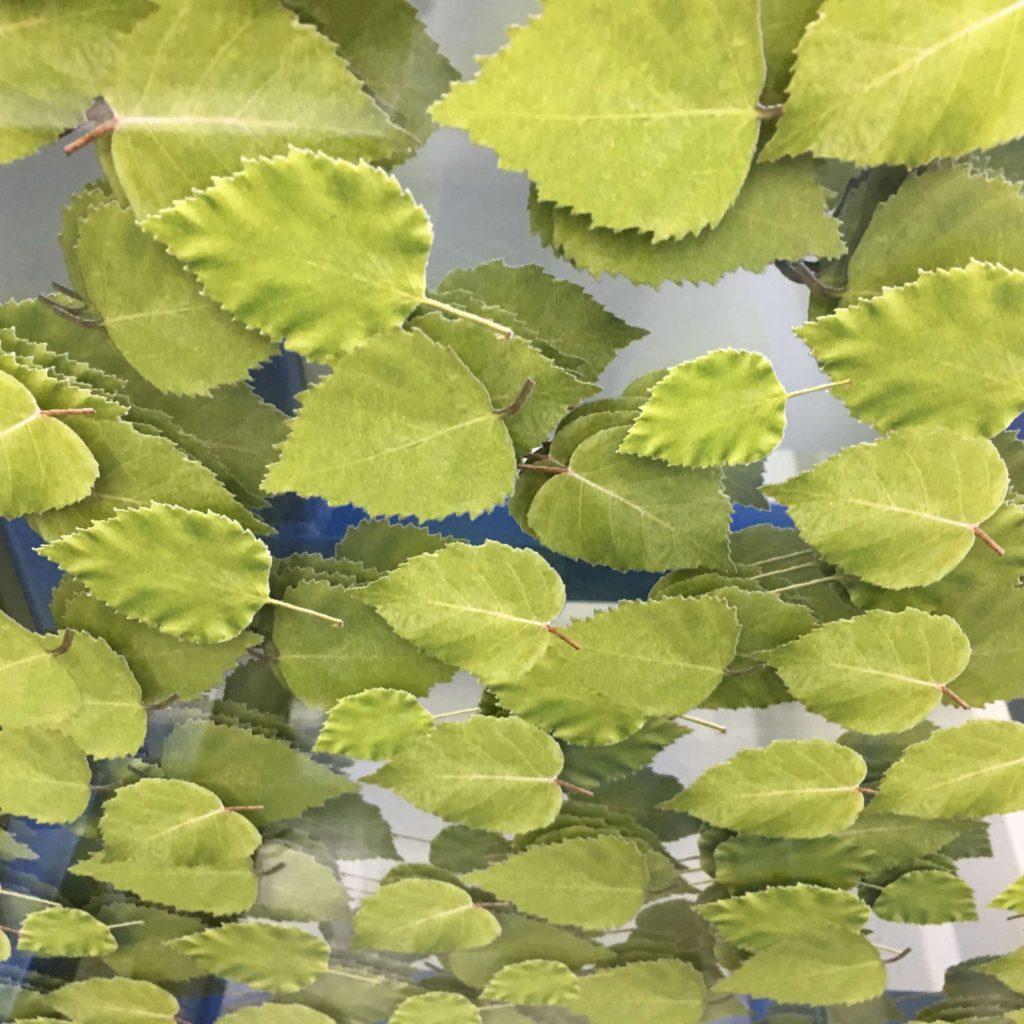 Glasscheiben mit beidseitig sichtbarem Blättermotiv auf einem Glasbock